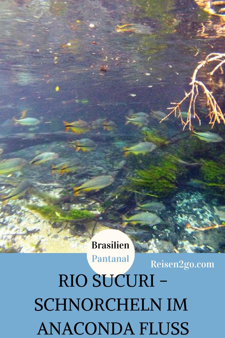 Schnorcheln im Rio Sucuri