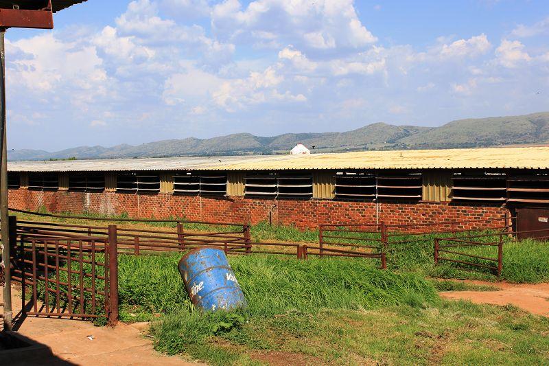 Stall Südafrika