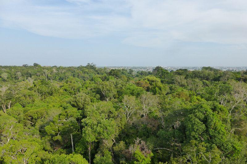 Regenwaldgebiet
