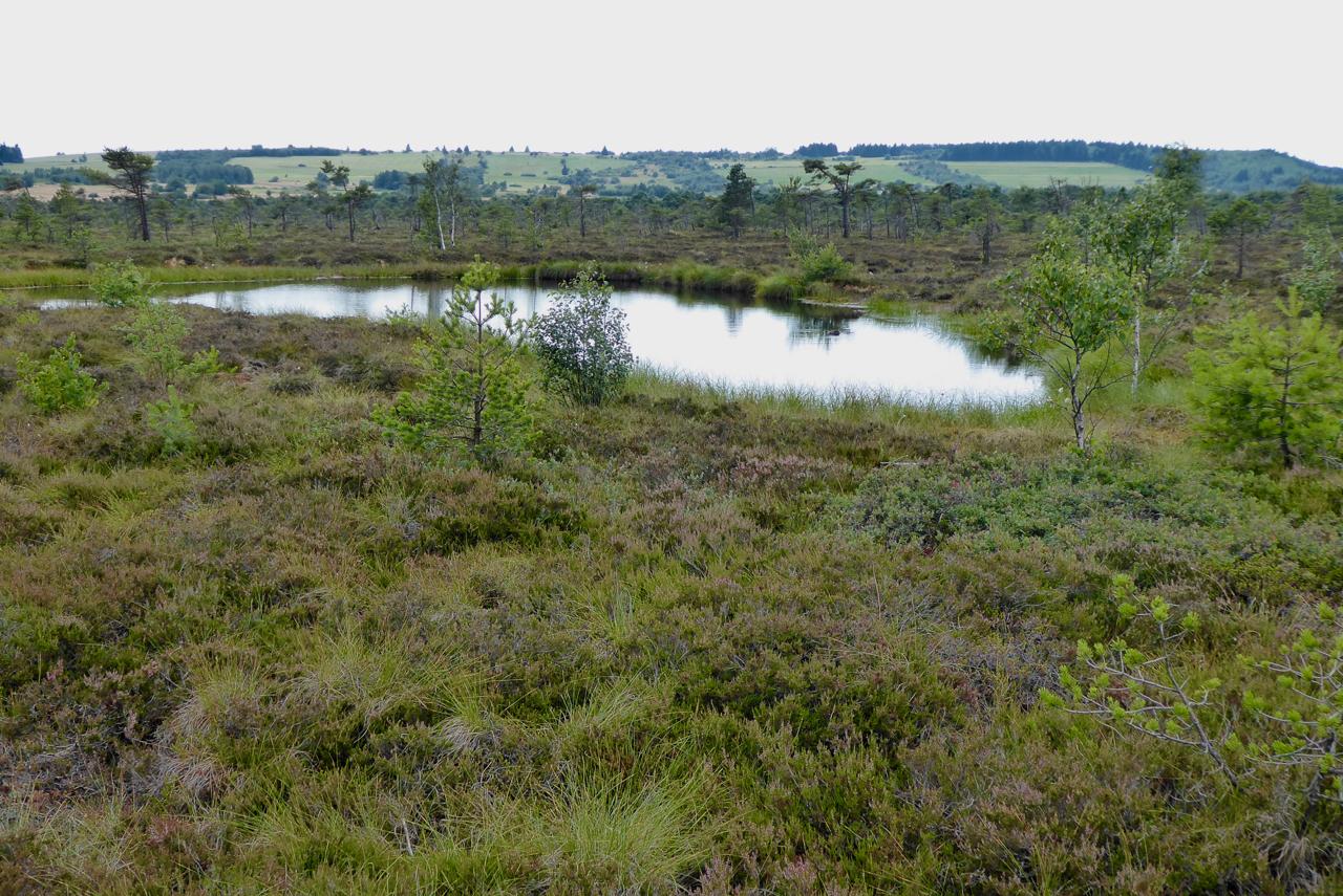 Moorauge im Schwarzen Moor